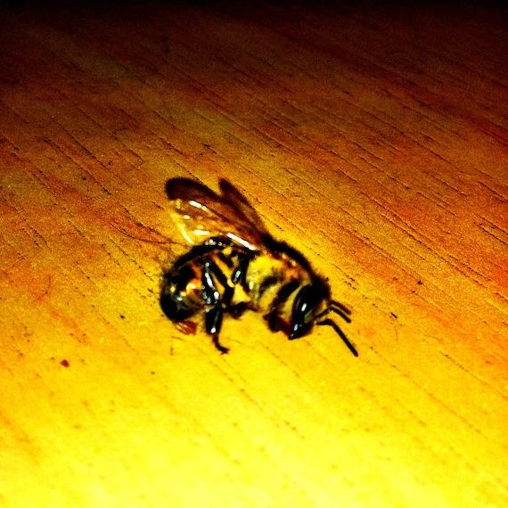 Picada de abelha o que fazer ?