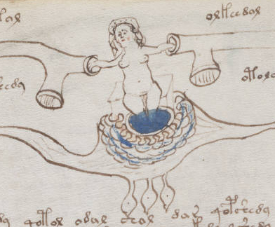 Voynich_manuscript_bathtub_example_77v_cropped