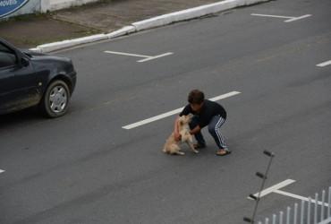 Criança arrisca sua vida e salva cachorro atropelado 02