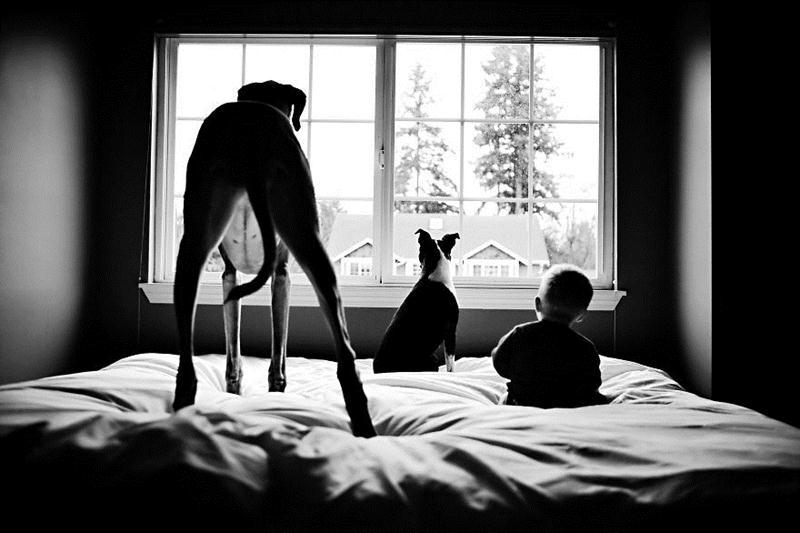 Cachorros e Padawans - Uma relação linda de se ver 04