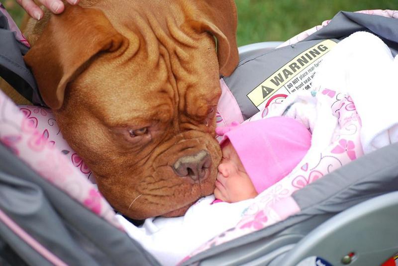 Cachorros e Padawans - Uma relação linda de se ver 05
