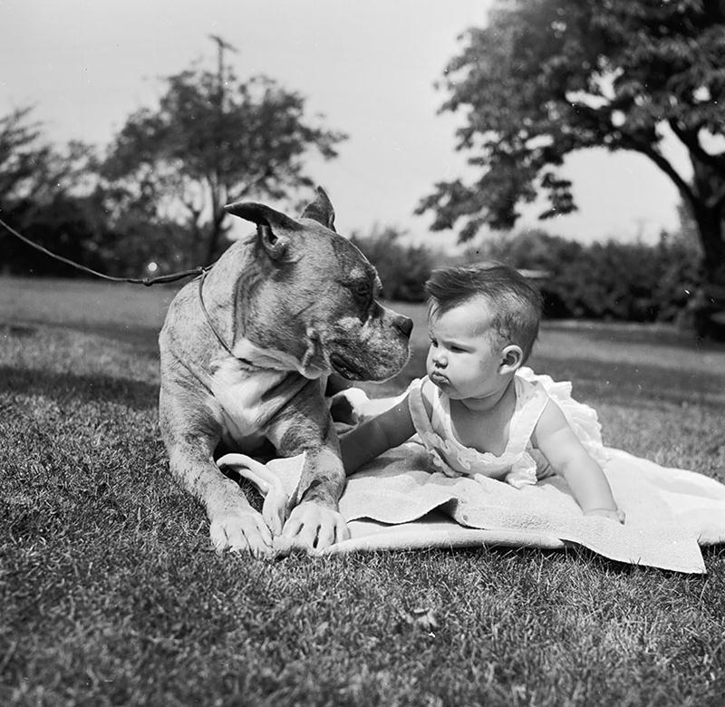 Cachorros e Padawans - Uma relação linda de se ver 08