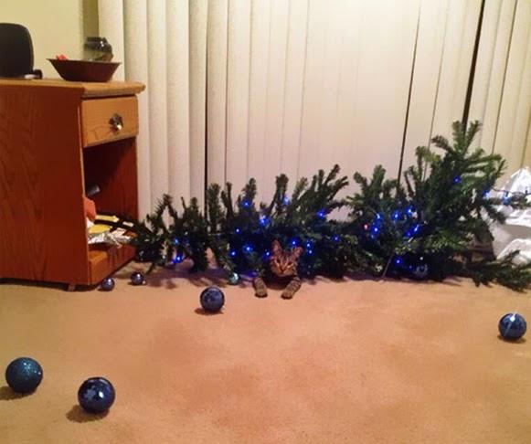 Árvores de Natal vs Animais de Estimação   Quem ganha essa batalha 02
