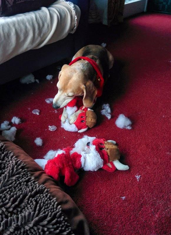 Árvores de Natal vs Animais de Estimação   Quem ganha essa batalha 07