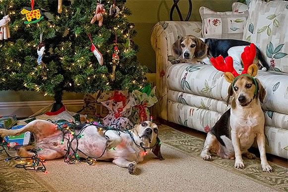 Árvores de Natal vs Animais de Estimação   Quem ganha essa batalha 11