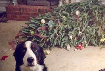 Árvores de Natal vs Animais de Estimação | Quem ganha essa batalha 01