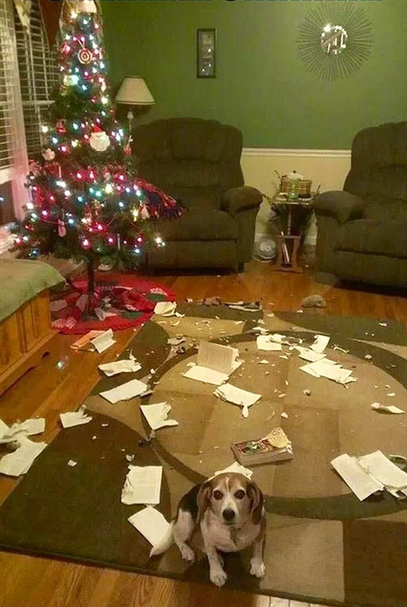Árvores de Natal vs Animais de Estimação | Quem ganha essa batalha 03