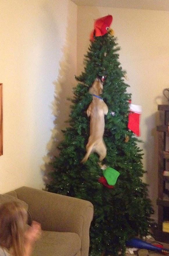 Árvores de Natal vs Animais de Estimação | Quem ganha essa batalha 05