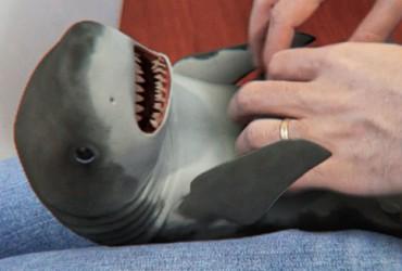 shark_surprised