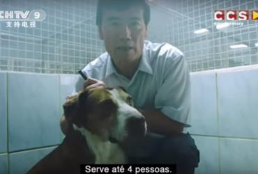 Que tal exportar os cães abandonados no Brasil para servirem de comida na China