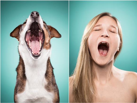 Cachorros e suas expressões 07