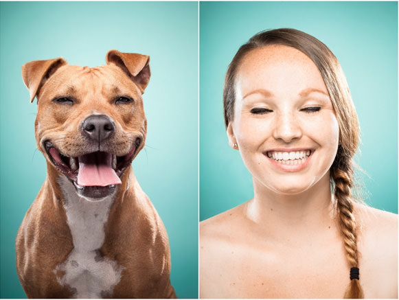 Cachorros e suas expressões 02