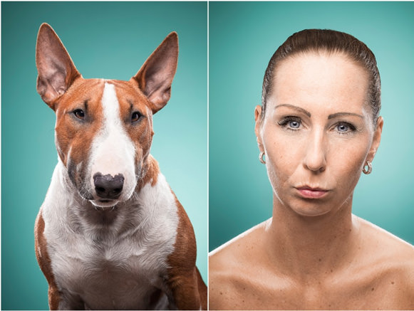 Cachorros e suas expressões 09