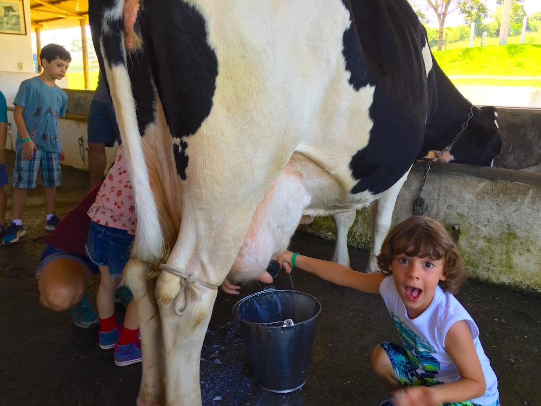 Fazenda Dona Carolina - Itatiba vaca