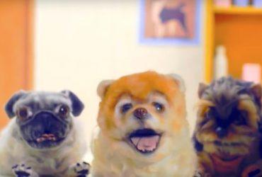 Nada fofo o vídeo que ensina aos Padawans a adotarem animais de estimação - a